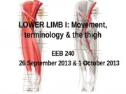 Lower Limb I