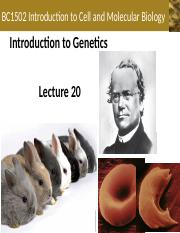 Lecture+20+-+Introduction+of+Genetics.ppt