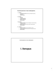 lecture_Xenopus_handouts