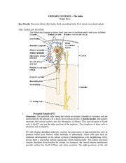 2010 URINARY SYSTEM II Complete +lab