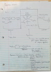 Lecture 1, Intro to Operations Notes