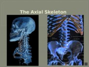 03a_Skeletal+System+-+Axial_Skeleton_Narrated