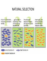 NATURAL SELECTION 2-2.ppt