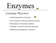 9 - Enzymes