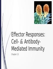 181 - 11 - T-Cell Effector Responses