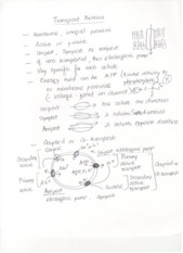 Exam 2 Notes Transport Proteins