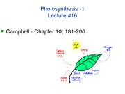 LECTURE-14_Photosynthesis-1