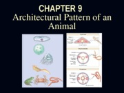 Chapter 9 Architectural Pattern of an Animal 2013 updated