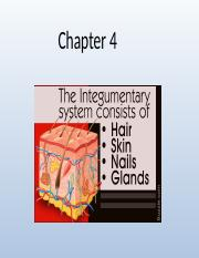 Chapter 4 Integumentary.pptx