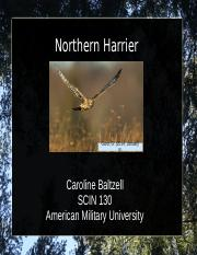 Northern Harrier Presentation.ppt