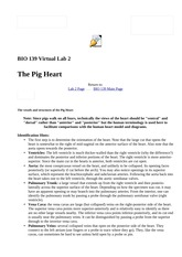 Lab 2—Pig Heart-Labeled