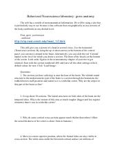 Gross Anatomy Lab Questions.pdf