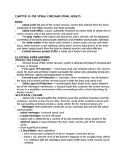 Anatomy and Physiology II- Chapter 13 Notes doc