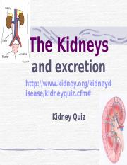 The_Kidneys.ppt
