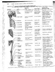 Body Joints Worksheet