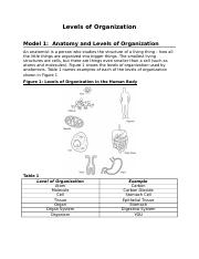 levels-of-organization-activity.doc