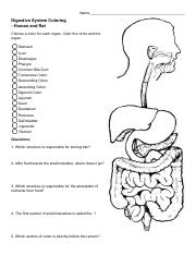 Digestive System Coloring.pdf