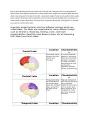 FUNCTION OF THE BRAIN.doc