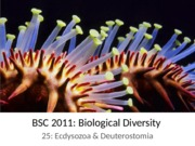 25 Invertebrates 3 Ecdysozoa Deuterostomia
