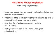 21 Oxidative Phosphorylation
