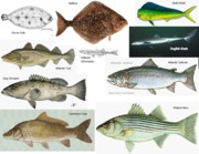 fish species images