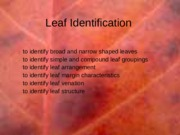 leaf-structure