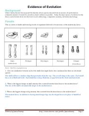 Evidence of evolution worksheet answer key