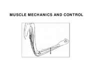 w6 l1 MUSCLE MECHANICS AND  CONTROL