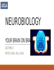 lecture2 - neurobiology
