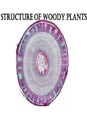 structure of woody plants.pdf
