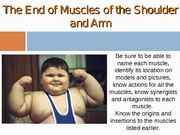 Chapter 13 Muscles of the Shoulder & Arm (1)
