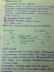 Bio Lecture Notes9