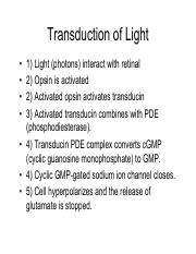 Transduction of Light