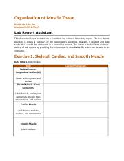 bio235_lab_report_muscle_tissue_.docx