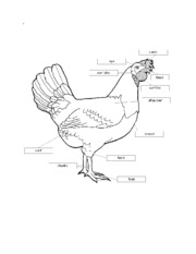 parts_of_the_chicken_2