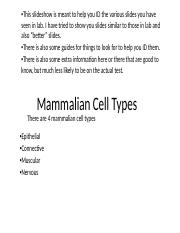 Trainer 3 - Mammalian Cell Types pt1.pptx