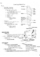 kins294 leg ankle foot notes
