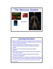 Zool2404_Nervous_system_F2016_student.pptx