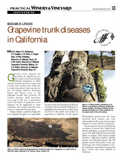 grapevinetrunkdiseases