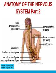 ANP1106 Topic 6_Anatomy of the Nervous System Pt2