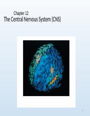Chapter 12 The Central Nervous System.ppt