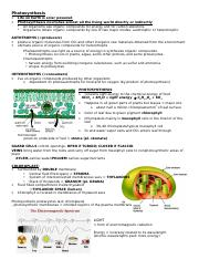 Photosynthesis Completed Guided Notes.doc