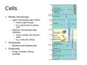 Ch 4 Cells