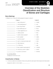 Review Sheet 9-  Overview of the Skeleton Classification and Structure of the