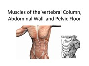 1 Muscles of the Vertebral Column, Abdominal Wall