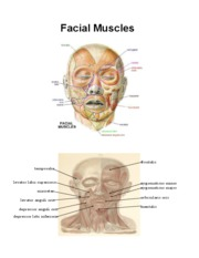 Muscles of the lips - Facial Muscles