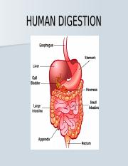HUMAN DIGESTION.ppt