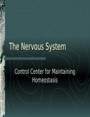 The Nervous System.ppt