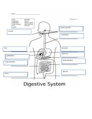 Tutorial 1 digestion activity worksheet