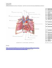 Assignment 3 -  Identifying the heart and lymphatic.docx